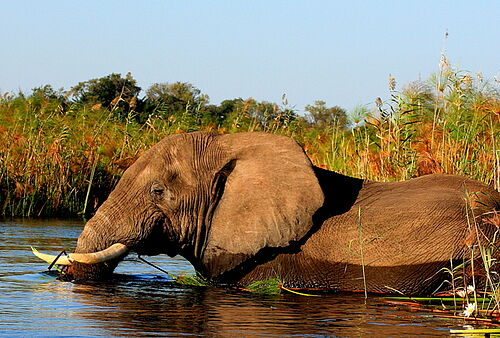 Botswana, Best Value, Safari, Okavango, Delta, Elefant