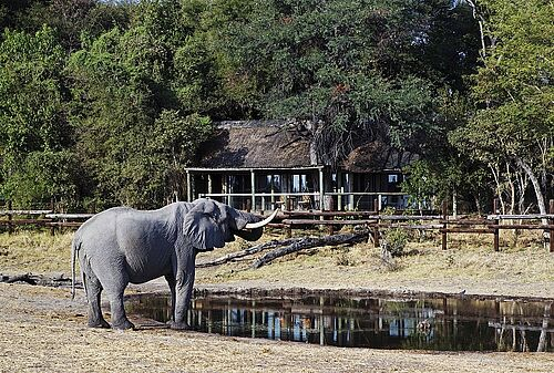 Ein Elefant am Wasserloch vor der Savute Safari Lodge in Botswana